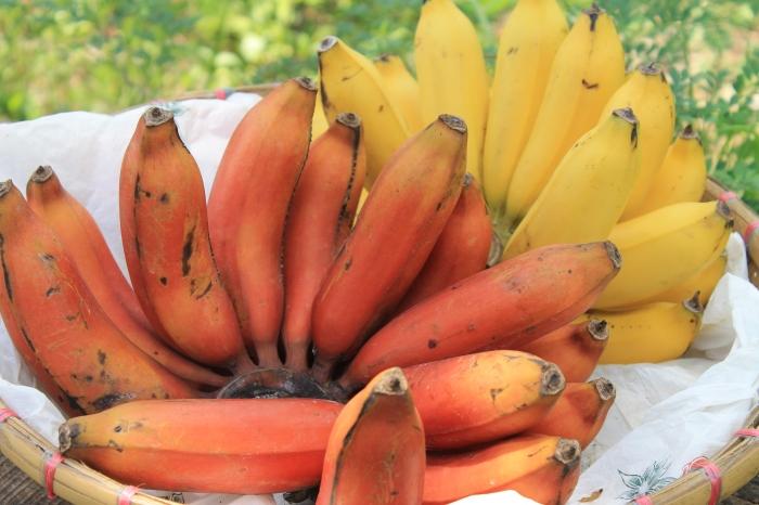 fruit-moalboal