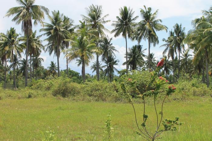paysage-moalboal