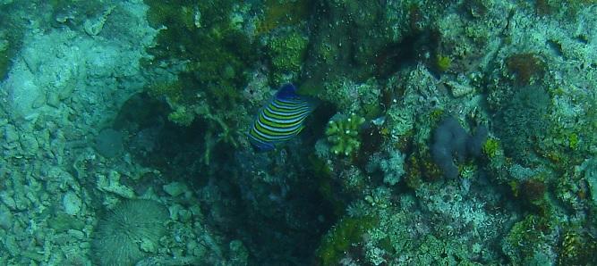 plongée moalboal philippines 1