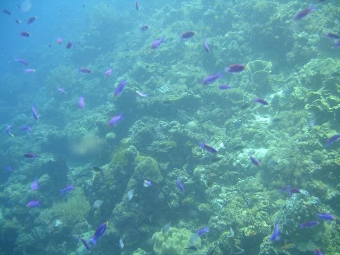 plongée moalboal philippines 2
