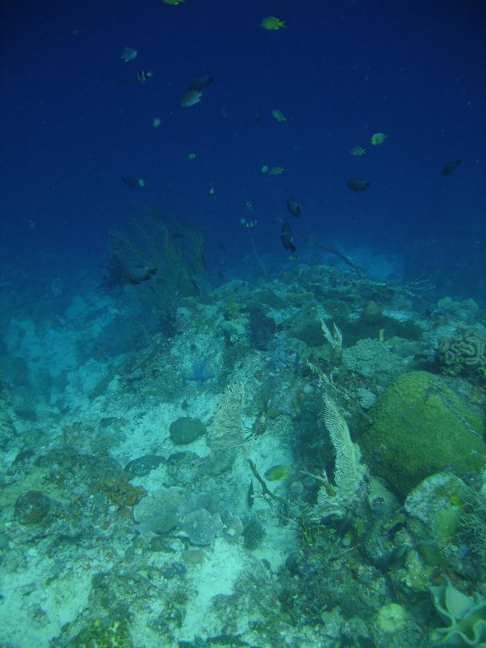 plongée moalboal philippines 3