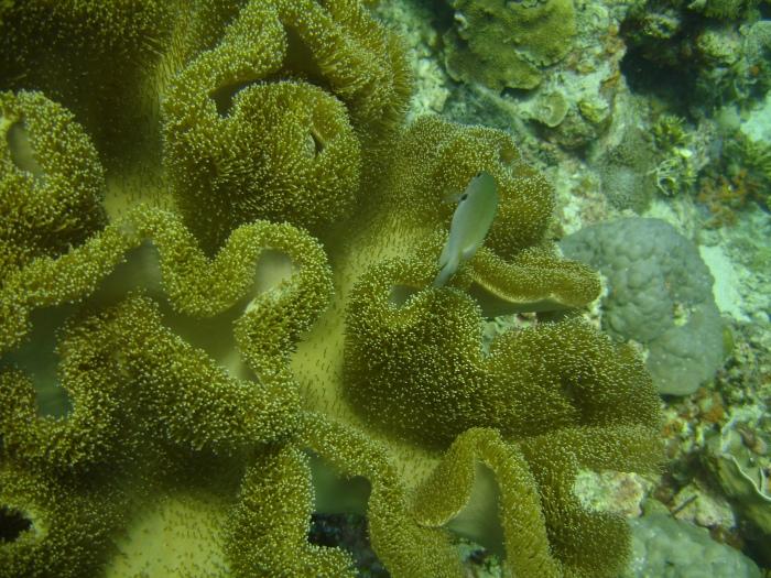plongée moalboal philippines 4