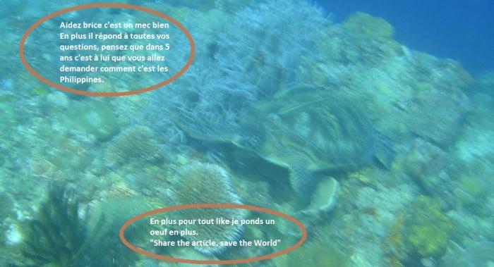 plongée moalboal philippines 6