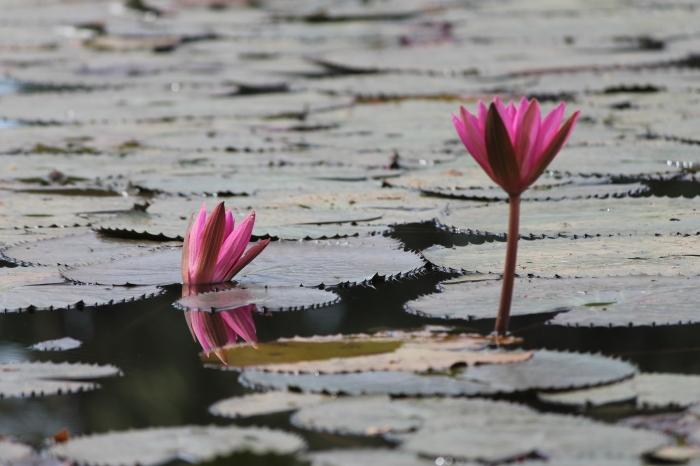 Angkor 1 (8)