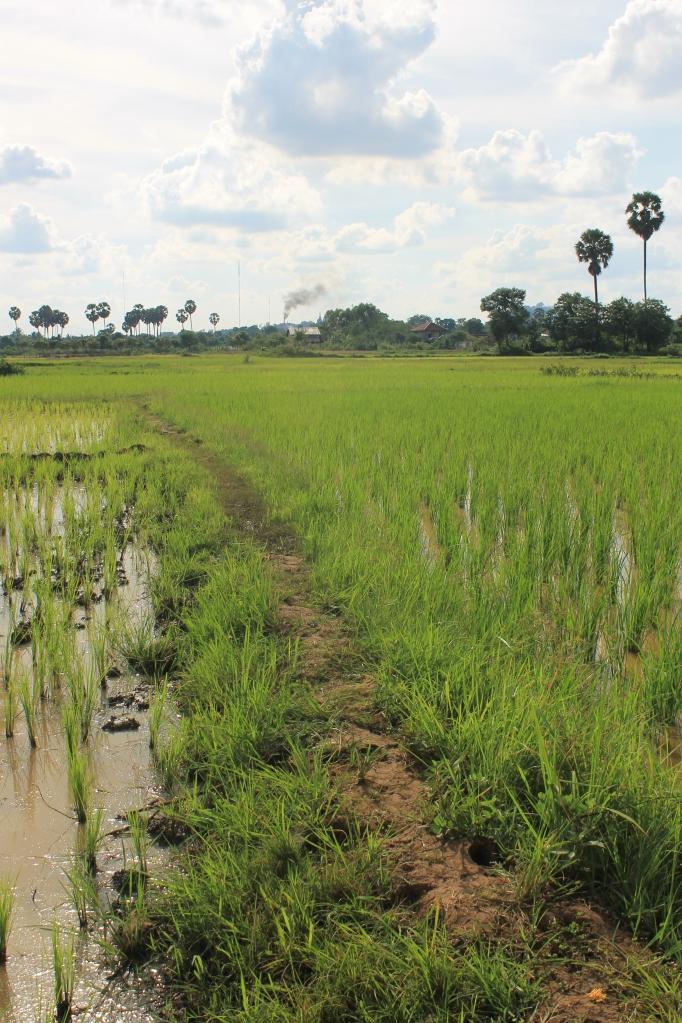 Kampong Cham Cambodge worldwildbrice.net mekong (9)