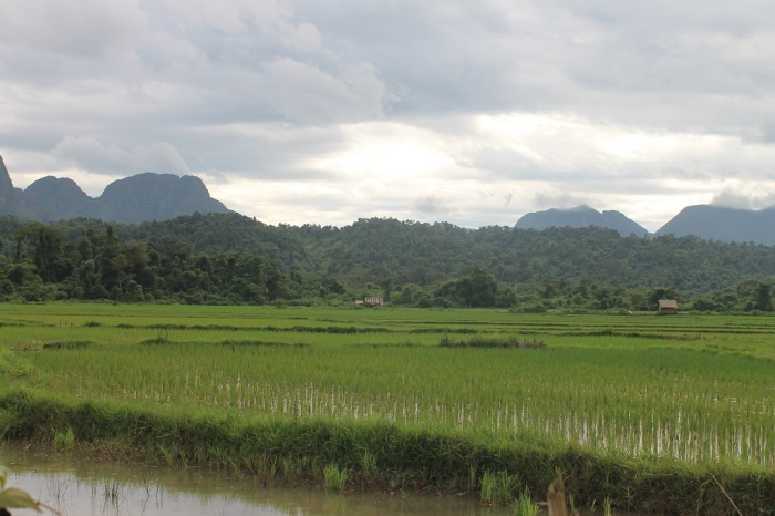 5 rizières à Vang Vieng