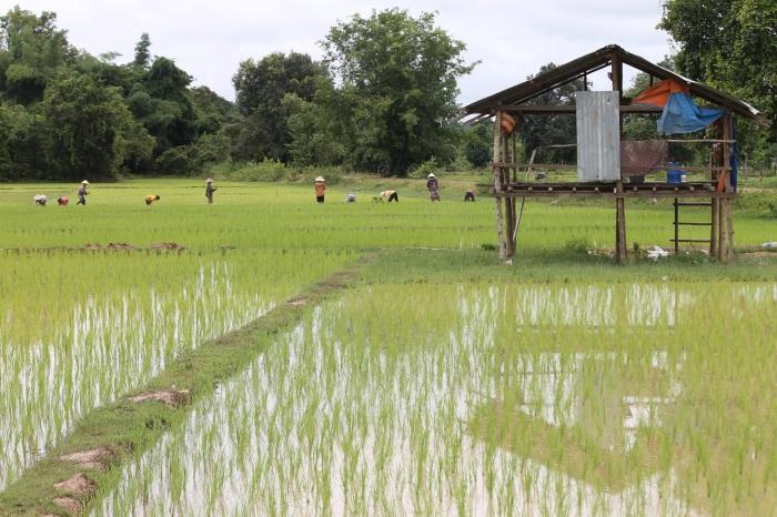 les 35 heures façon Laos !