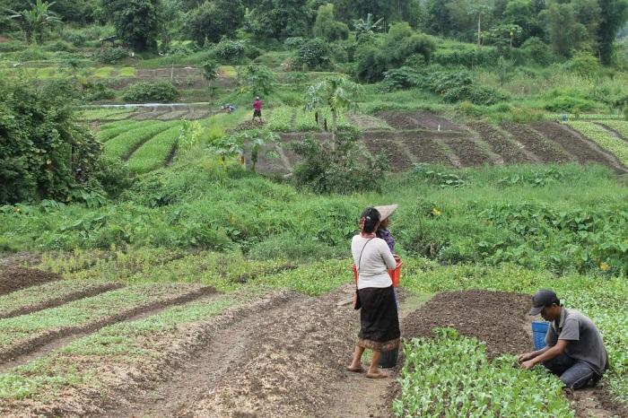 agriculture sur la route