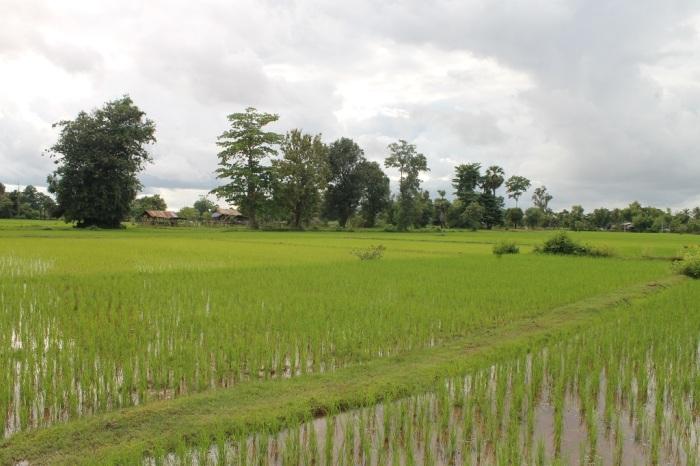 paysage Don Khon