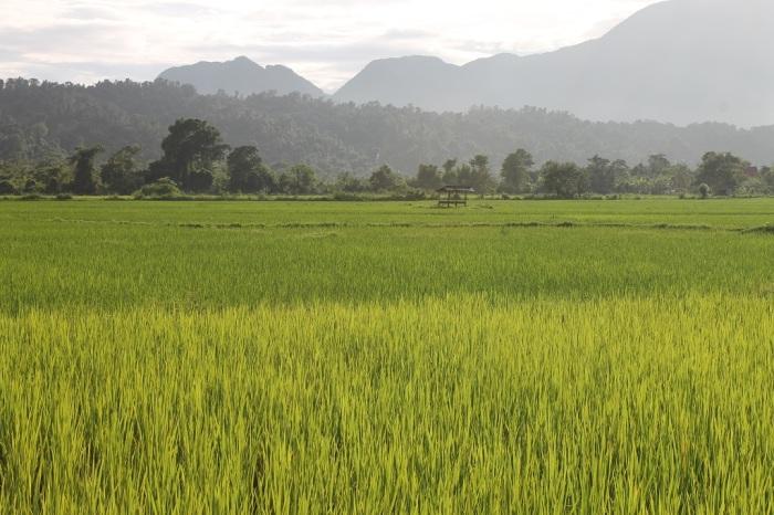 paysage Vang Vieng