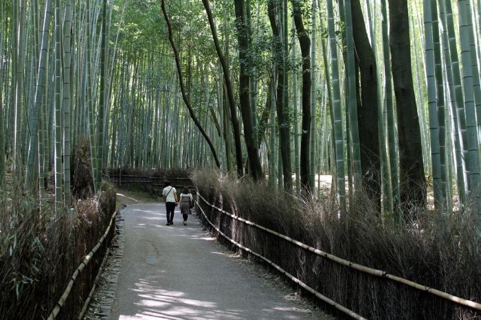 La fameuse foret de bambou d'arashiyama à l'ouest de kyoto
