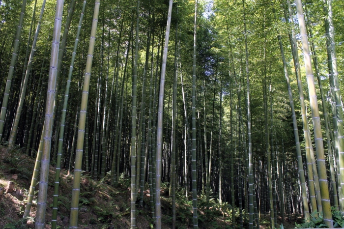 foret-bambous-kyoto