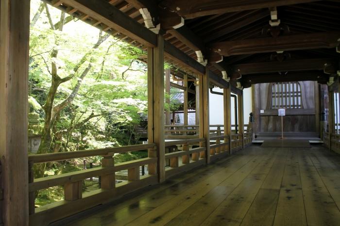 Vue de l'intérieur à l'ombre avec une vue superbe sur les arbres