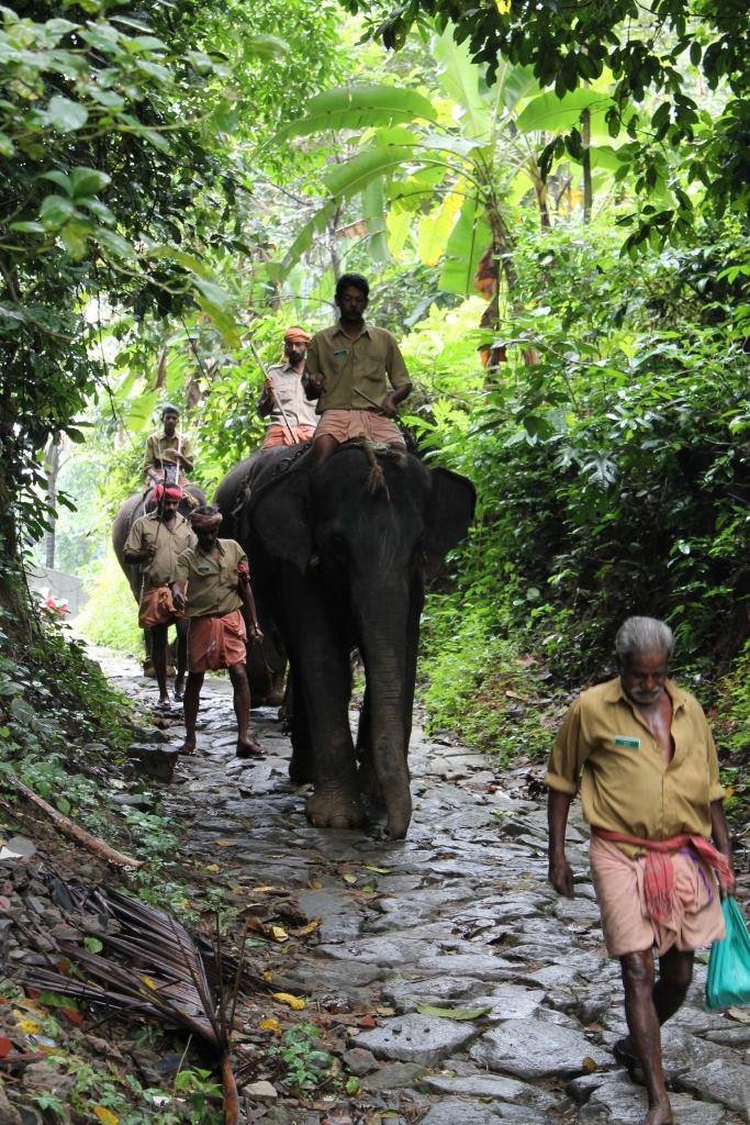 éléphants-kochi
